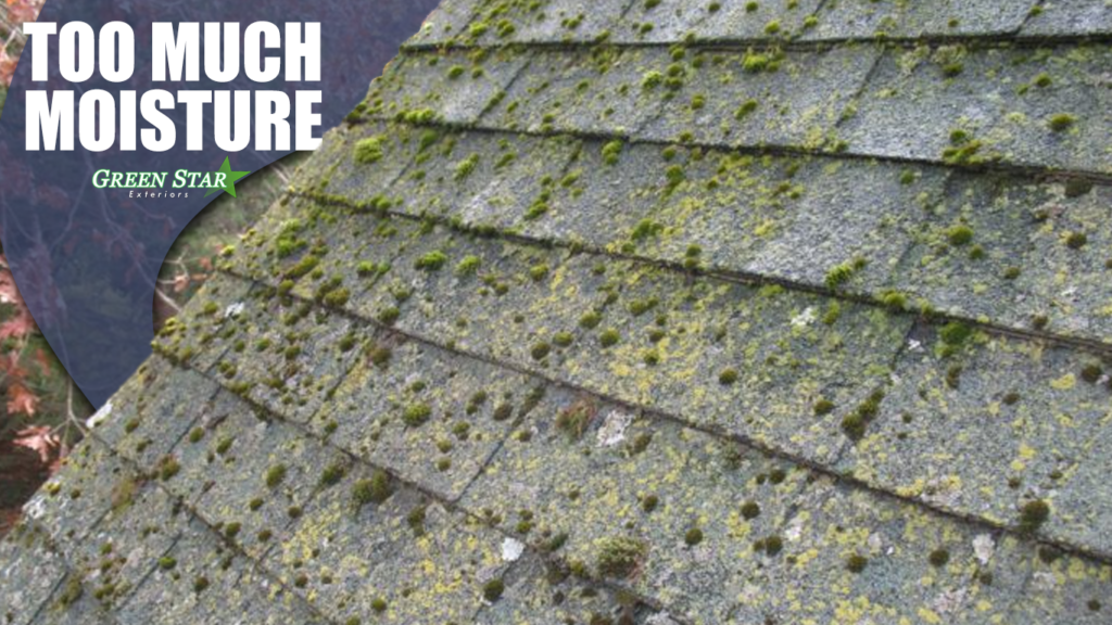 Roof Moss - Green Star Exteriors